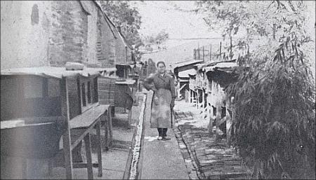 Departamentos de cría de conejos. 1945