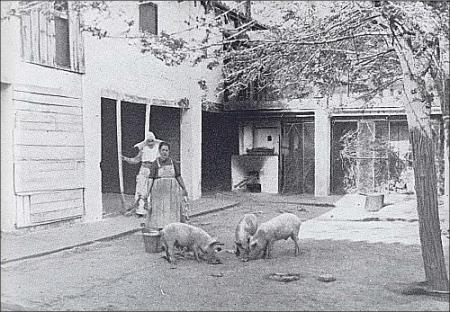 Departamento de cría de ganado porcino. 1945